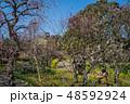 梅が満開の須磨離宮公園 48592924