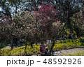 梅が満開の須磨離宮公園 48592926
