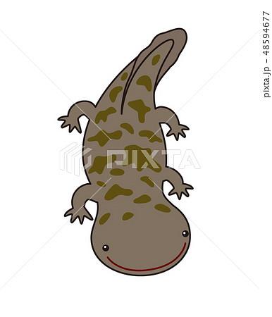オオサンショウウオ ハンザキ Giant Salamanderのイラスト素材 48594677