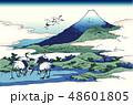 富士山 鶴 相州梅沢庄のイラスト 48601805