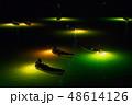 シラスウナギ漁 吉野川 48614126