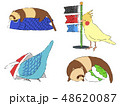 こどもの日フェレットと小鳥 48620087