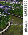 花 緑色 日本の写真 48623599