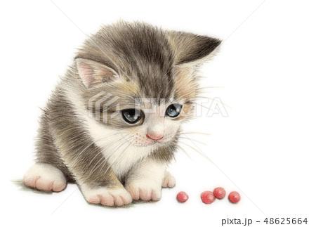 猫 39 48625664