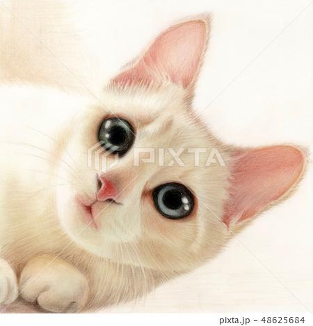 猫 20 48625684