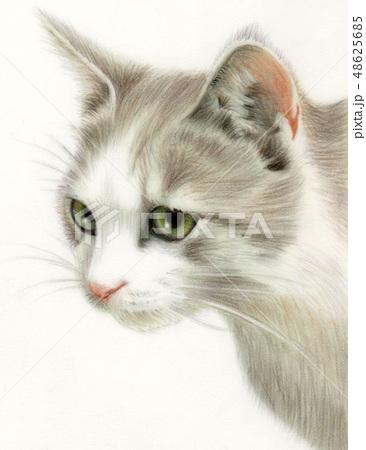 猫 19 48625685