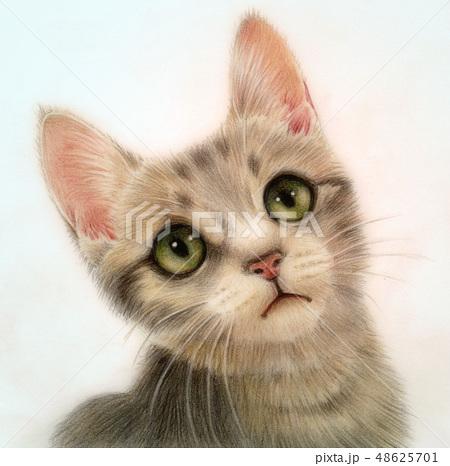 猫 3 48625701