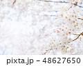 桜 染井吉野 文字スペースの写真 48627650