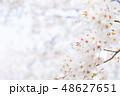 桜 染井吉野 文字スペースの写真 48627651