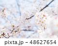 桜 染井吉野 文字スペースの写真 48627654