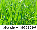 グリーン 緑色 草の写真 48632396