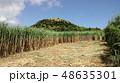 さとうきび畑の刈入れ 48635301