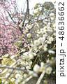 枝垂れ梅 48636662