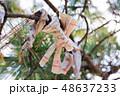 住吉神社のおみくじ 48637233