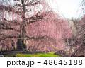 鈴鹿の森庭園 梅 春の写真 48645188