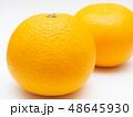 八朔 柑橘類 果物の写真 48645930