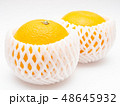 八朔 柑橘類 果物の写真 48645932
