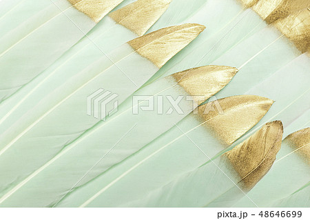 Mint green feathers with gold glitter 48646699