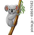 動物 マンガ 漫画のイラスト 48647082