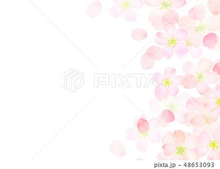 桜 水彩風 テクスチャー 48653093