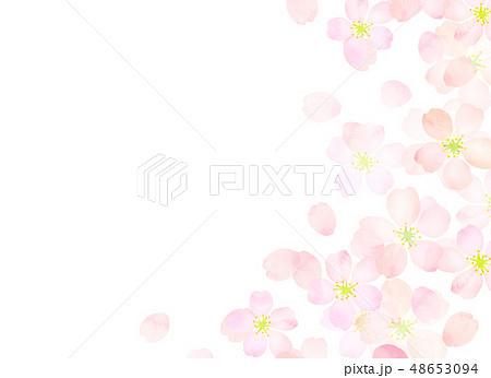 桜 水彩風 テクスチャー 48653094