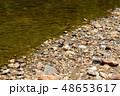 河原に止まる、アゲハチョウ 1匹 48653617