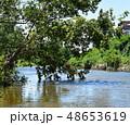 川沿いの木 水面と枝葉 48653619