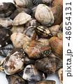 アサリ 貝 海産物の写真 48654131