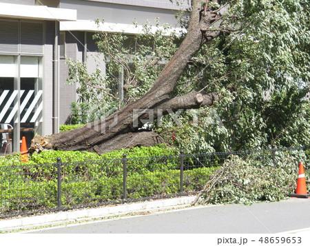 台風被害 48659653