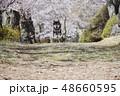 黒柴 桜 柴犬の写真 48660595