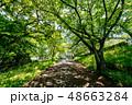 自然イメージ 48663284