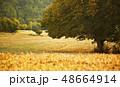 Tree on field 48664914