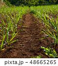 畑 自然 48665265