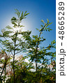 緑 青空 自然 48665289