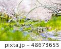 桜 花 春の写真 48673655