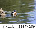 鴨 鳥 泳ぐの写真 48674269
