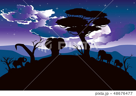 African Night with Elephant 48676477