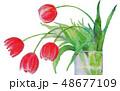 水彩画 花 チューリップのイラスト 48677109