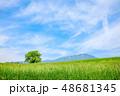 高原 草原 夏の写真 48681345