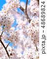 桜 花 植物の写真 48689824