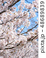 桜 花 植物の写真 48689839