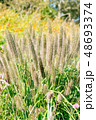 自然イメージ 48693374