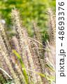 自然イメージ 48693376