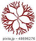 海藻 紅藻類 ムカデノリ科 ベクター素材 48696276