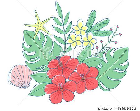南国植物 48699153