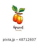 アプリコット アンズ 杏のイラスト 48712607
