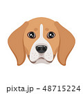 dog pet head icon 48715224