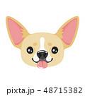 dog pet head icon 48715382