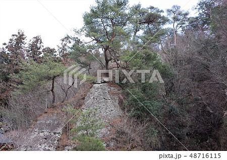 山の上の松の木 48716115