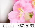 金魚草 花 植物の写真 48719153